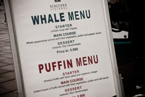 Whale and Puffin Reykjavik Iceland